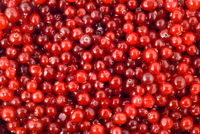 Бизнес план стационарного морозильного склада для хранения, очистки и реализации ягод