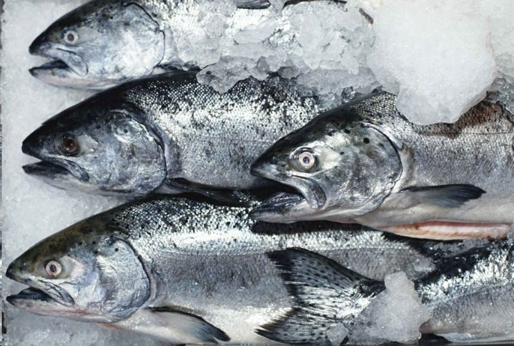 Бизнес план строительства холодильника по хранению рыбы