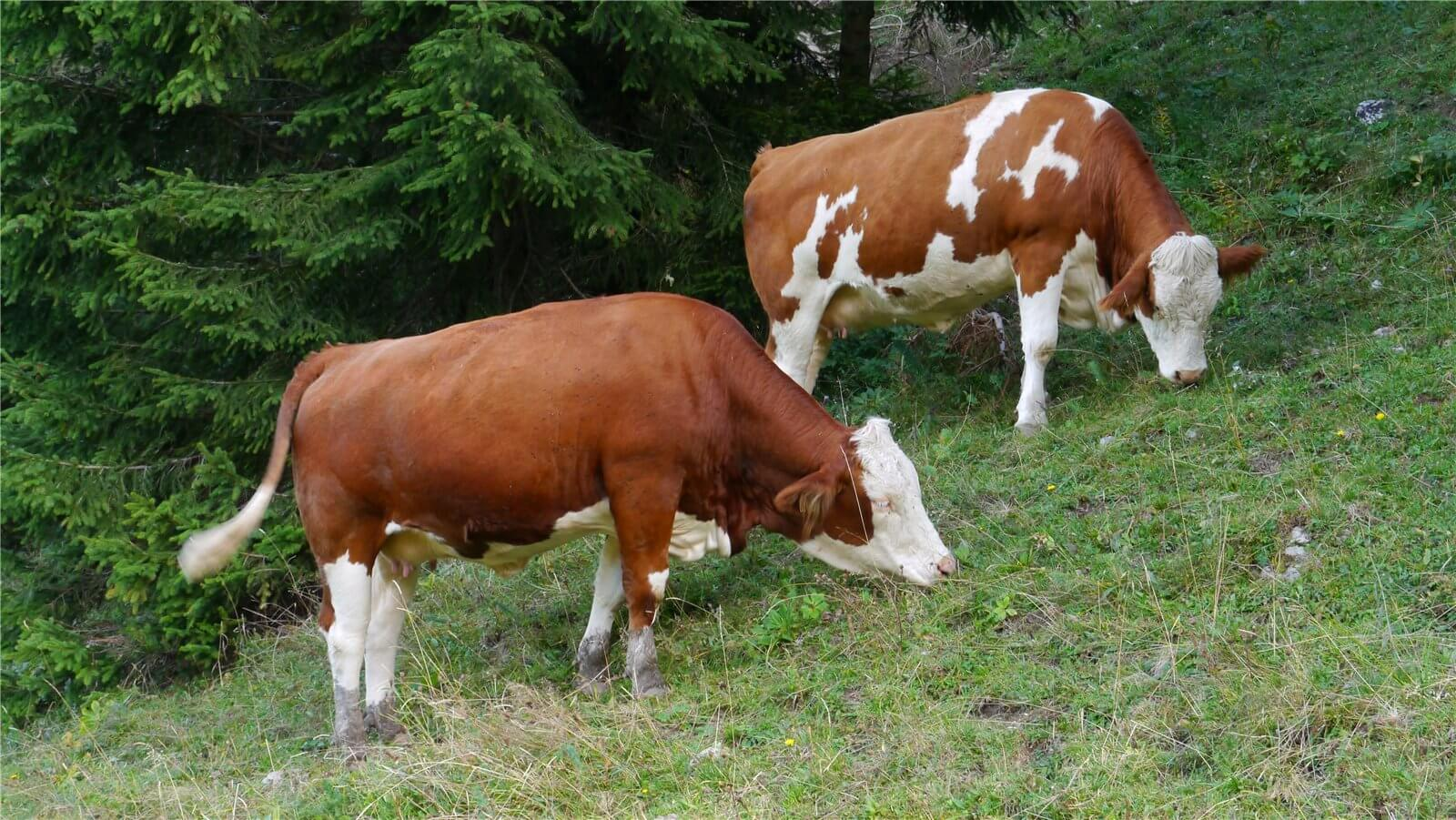 Бизнес план мясное скотоводство образец замена батареек бизнес план
