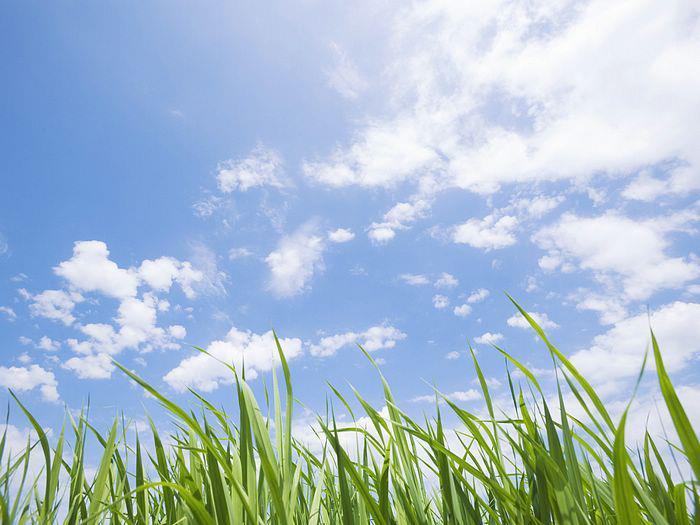 Бизнес план экологического консалтинга и проектирования