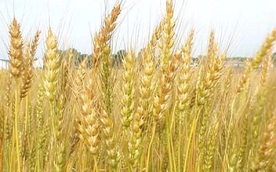 Бизнес план экспорт зерна