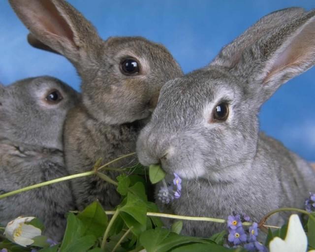 Бизнес план фермерского хозяйства по разведению кроликов