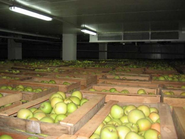 Бизнес план оптово-распределительного центра сельскохозяйственной продукции