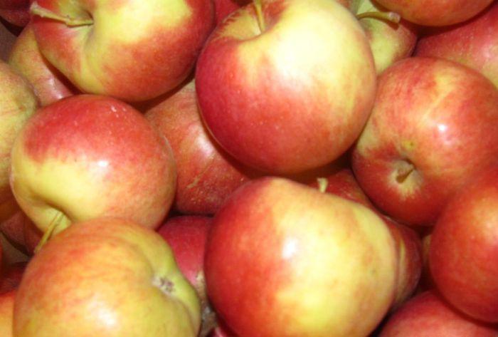 Бизнес план оптового склада фруктов и овощей