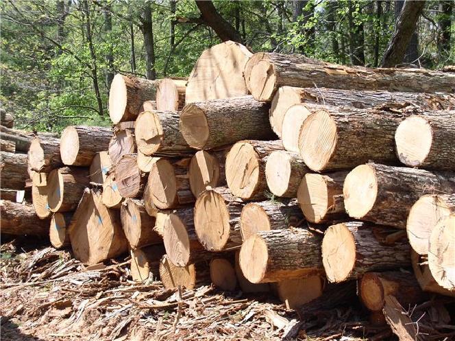 Бизнес план переработки древесины