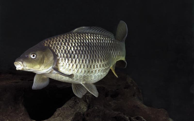 Бизнес план переработки рыбы