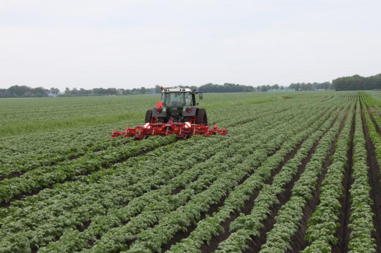 Бизнес план производства картофеля