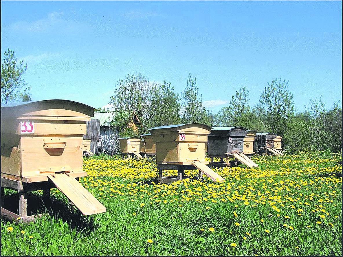 Бизнес план производства продуктов пчеловодства