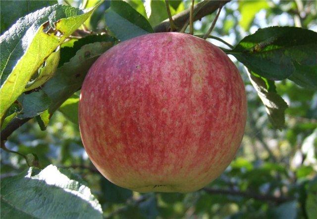 Бизнес план производства яблочного сока и пюре