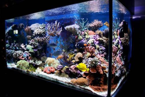 Бизнес план производство аквариумов