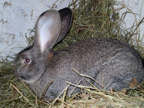 Бизнес план разведения кроликов в домашних условиях
