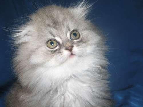 Бизнес план центра досуга владельцев элитных кошек вместе с их питомцами