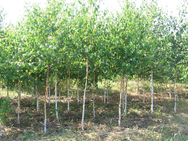 Бизнес план выращивания и продажи рассады и саженцев и открытие зоны отдыха