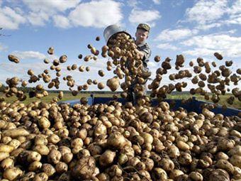 Бизнес план выращивания овощей в открытом грунте