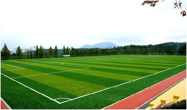 Бизнес план футбольного стадиона