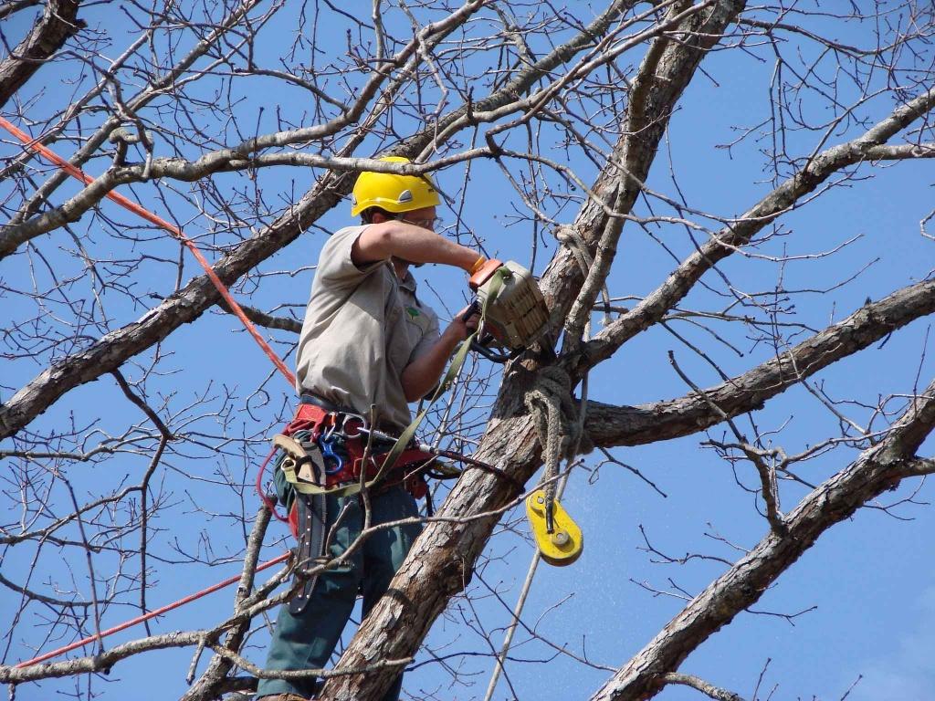 Бизнес план опилка деревьев