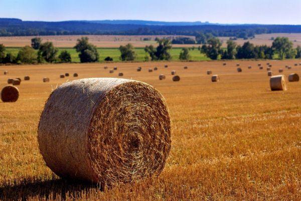 Бизнес план по выращиванию сена